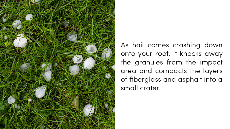 Hail knocks away the granules from the impact area and compacts the layers of fiberglass and asphalt into a small crater.